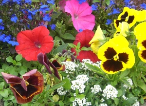 bunte Blüten 2